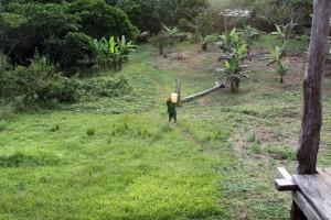 teren zielony